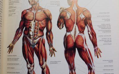 Slinkende spieren.